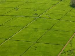 Large scale farming in Kenya